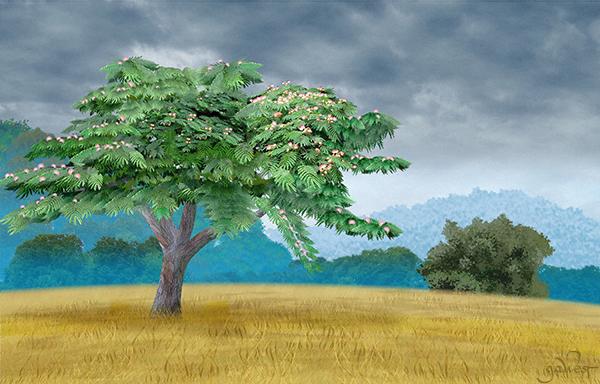 Mimosa Tree Image